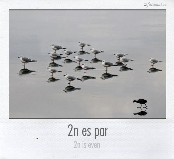 2n es par