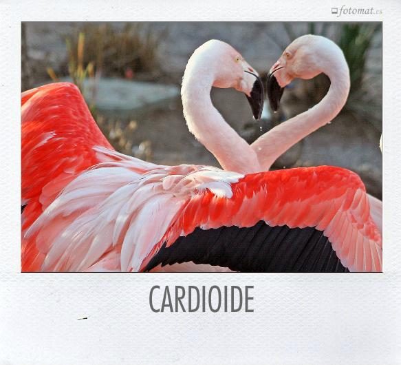 CARDIOIDE