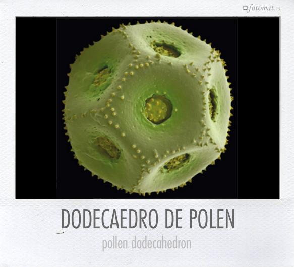 DODECAEDRO DE POLEN