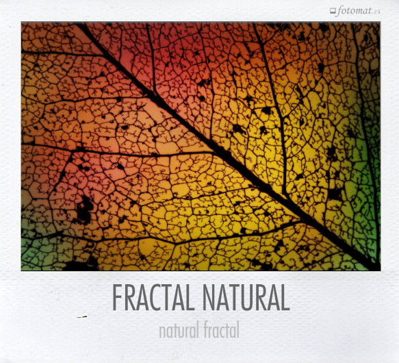 FRACTAL NATURAL