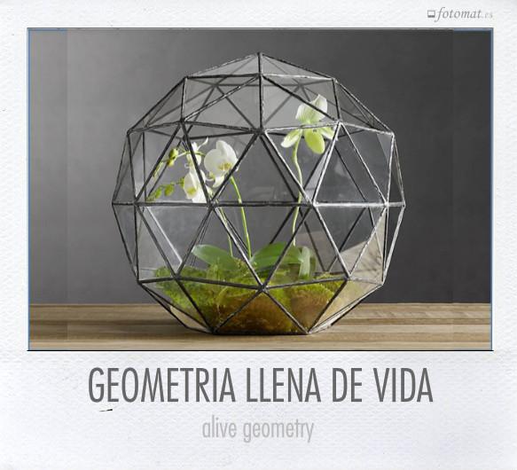 GEOMETRIA LLENA DE VIDA