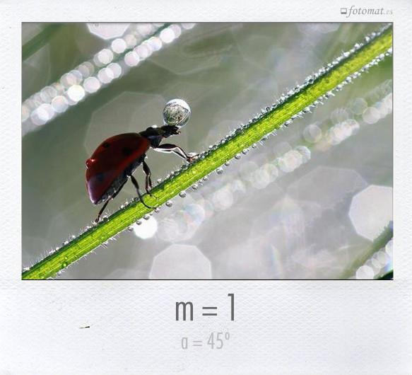 m = 1