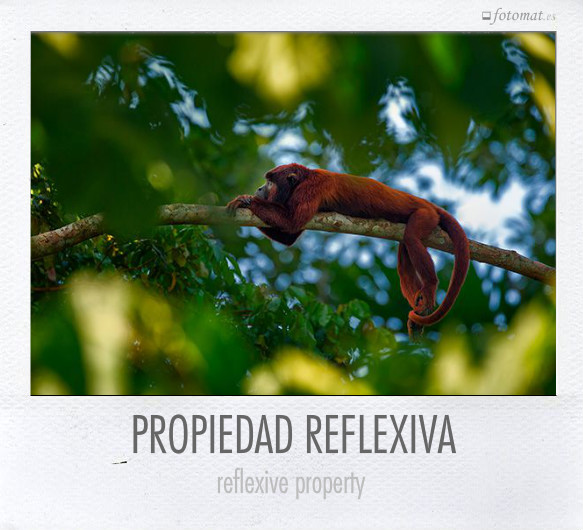 PROPIEDAD REFLEXIVA