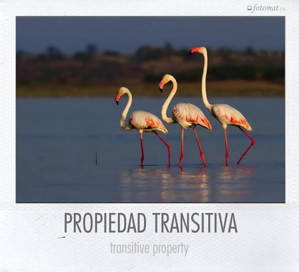 PROPIEDAD TRANSITIVA