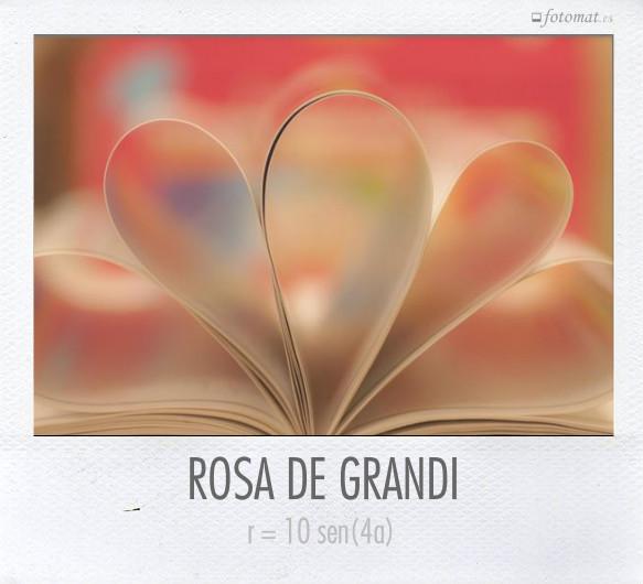 ROSA DE GRANDI