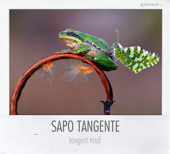 SAPO TANGENTE